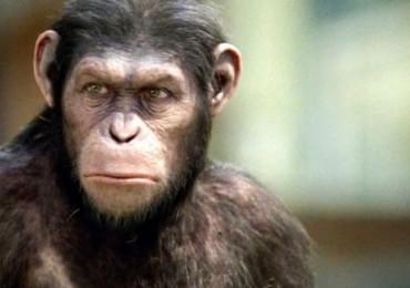 el planeta de los simios confrontacion escena 5