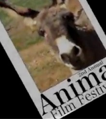 Celebran Festival de Cine Animal con comedia